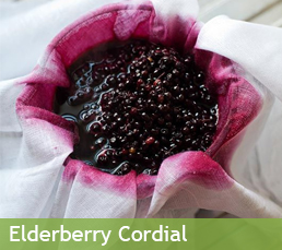 elderberry cordial photo feature